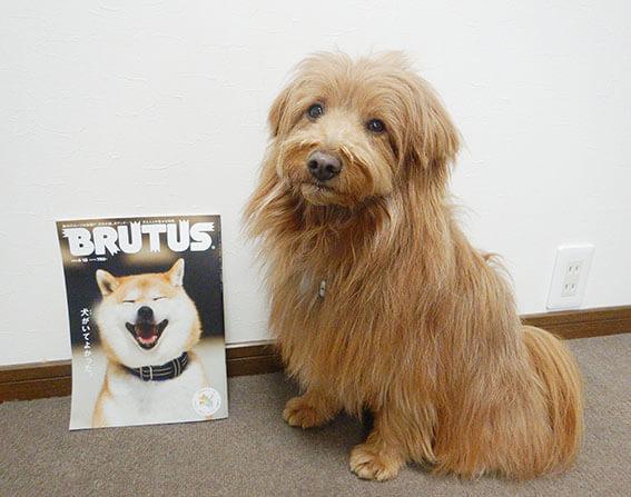 BRUTUSと犬