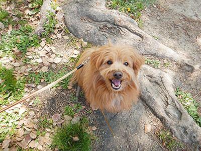 笑顔でこっちを見上げる犬