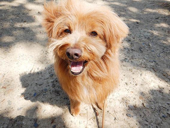 笑顔でおすわりする犬