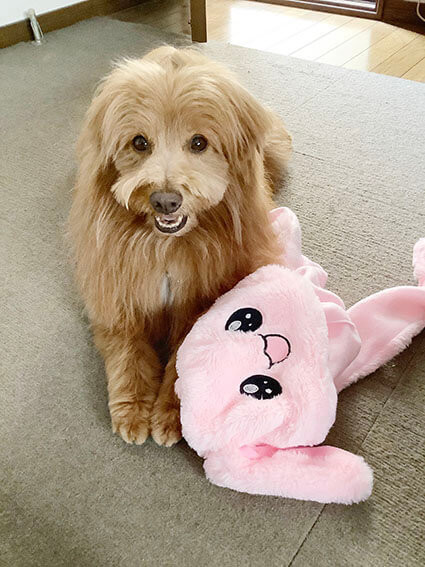 うさぎのぬいぐるみと犬