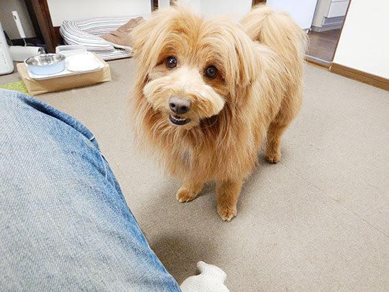 遊びを誘う犬の写真