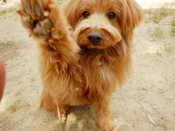 片手を上げる犬