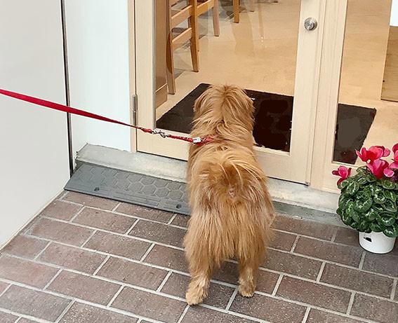 ドアの前で待つ犬