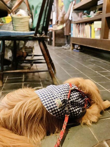 雍州路の店内でくつろぐ犬