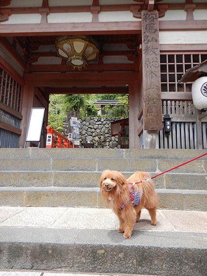 鞍馬寺の麓の門前にいる犬。