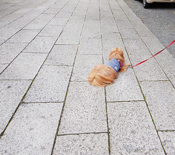 ストライキする犬。