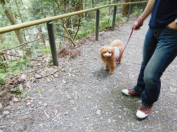 歩くのを嫌がる犬