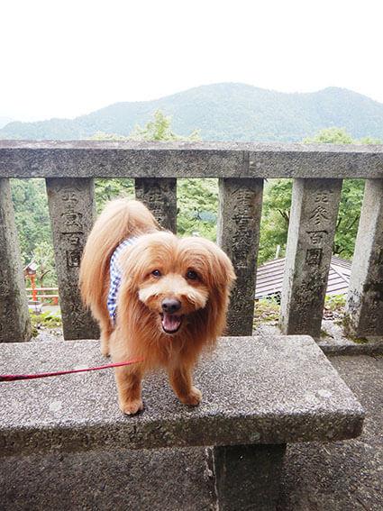鞍馬山の山頂にいる犬