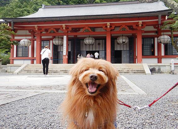 鞍馬山寺と犬