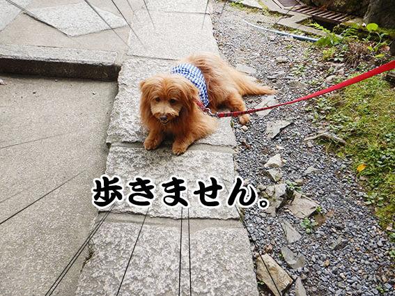 ストライキする犬