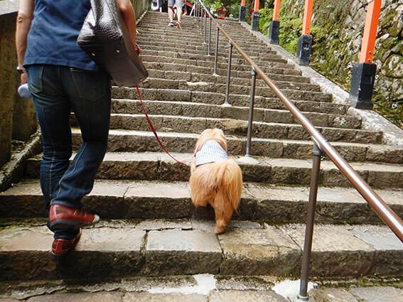 階段をのぼる犬の後ろ姿