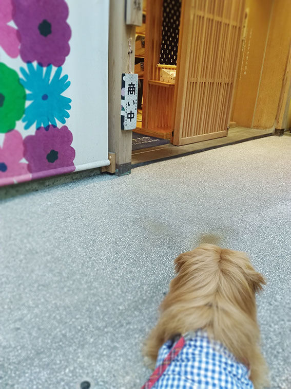 SOUSOUの前にいる犬