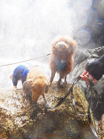 滝に打たれて逃げる犬