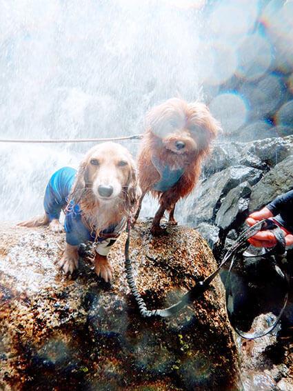 滝に打たれる犬