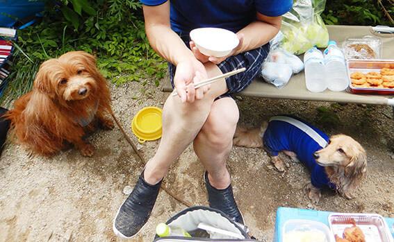 お昼ご飯と犬