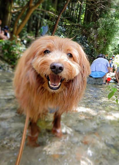 川で遊ぶ犬の写真