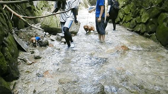 川遊びする犬たち