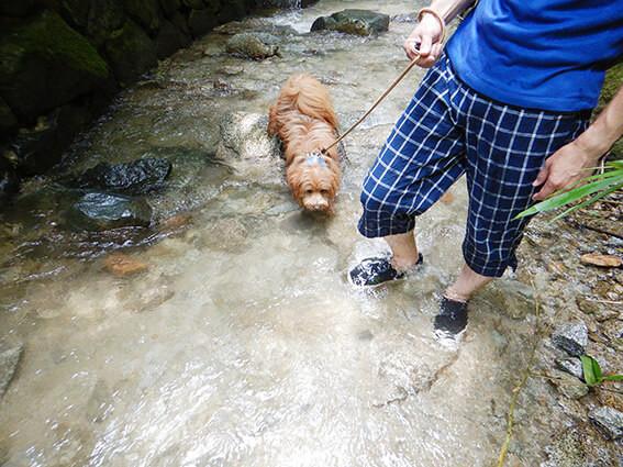川を歩く犬