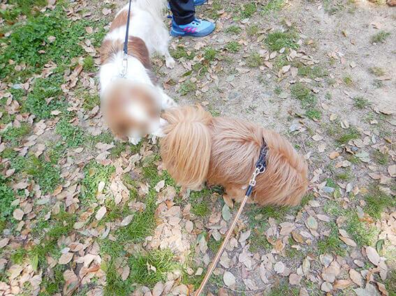 犬のお尻の匂いを嗅ぐ犬