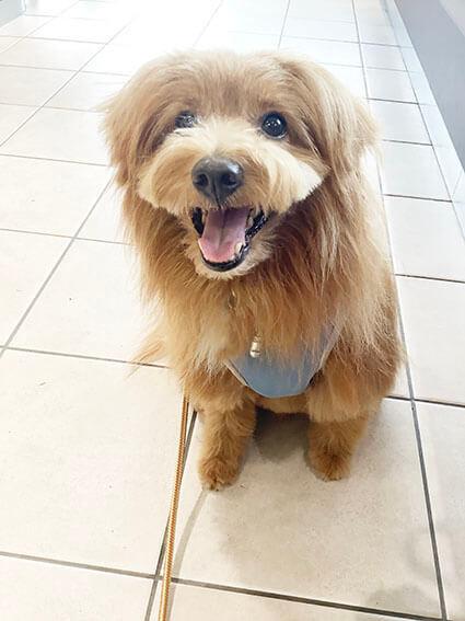 病院で笑顔の犬