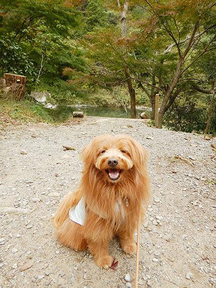 山の中で笑顔の犬