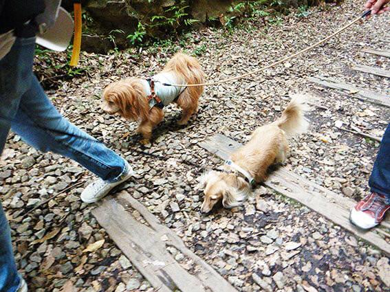 廃線ウォーキングする犬