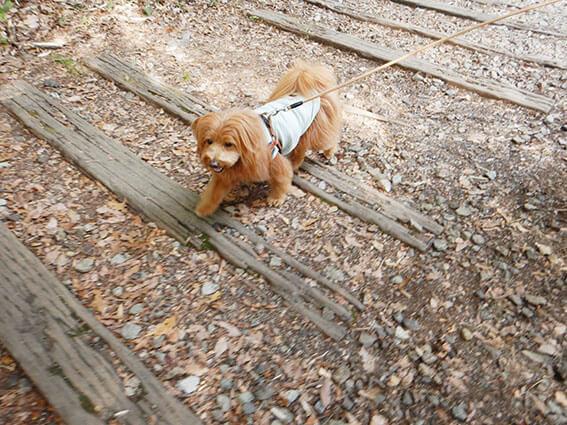 廃線跡を歩く犬