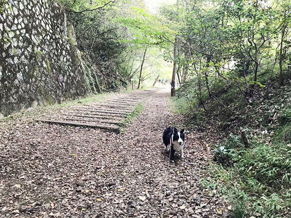 犬と行く廃線ウォーキング
