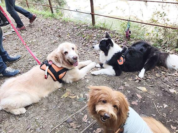 犬種バラバラな集合写真