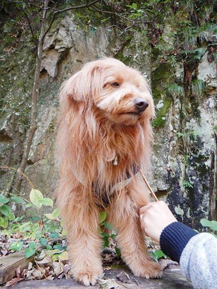 犬にくっついた種を取る人