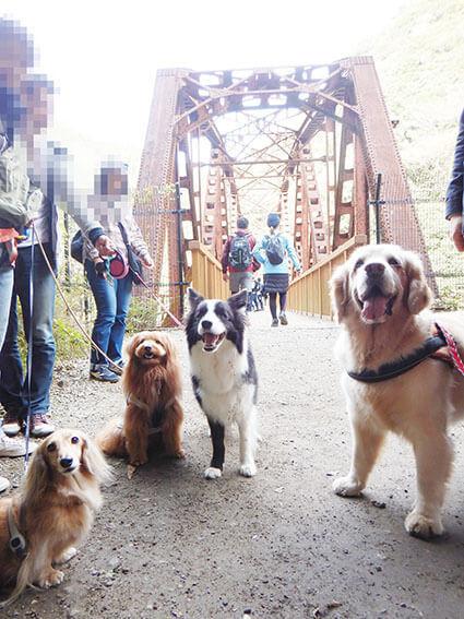 鉄橋と犬たち