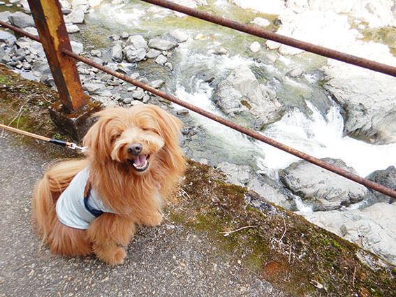 川沿いで笑顔の犬