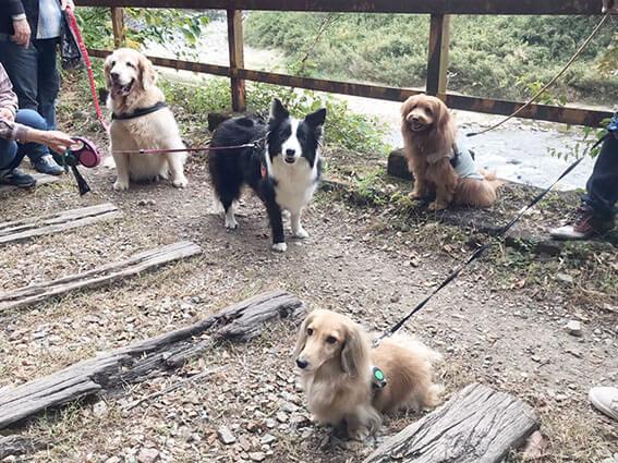 廃線ウォーキングする犬たち