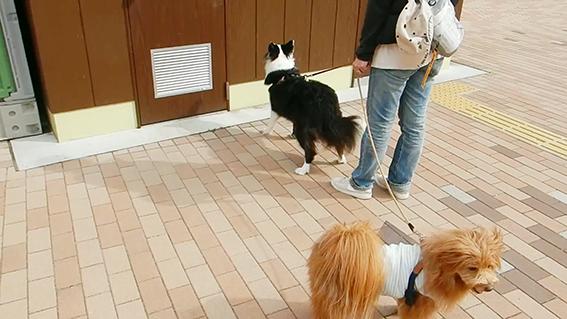 トイレに入った飼い主を待つ犬