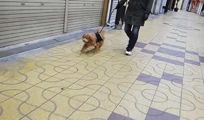 商店街を歩く犬