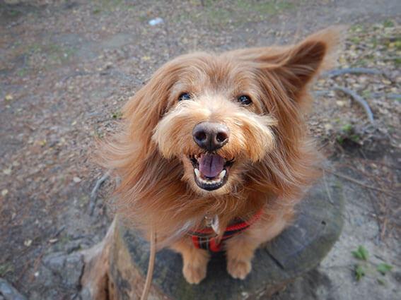 片耳が立っている犬