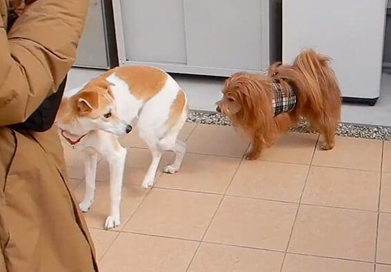 元野犬とミックスの保護犬