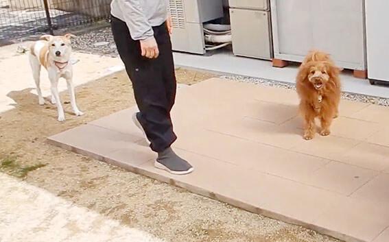 笑顔の犬と元野犬
