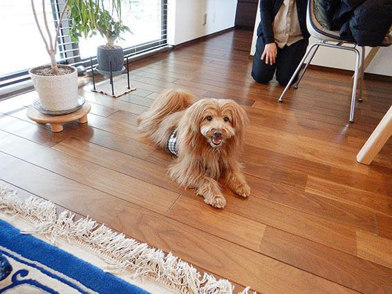 家の中でくつろぐ犬