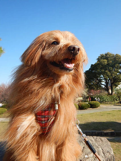 青空バックの犬の写真