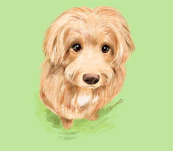色鉛筆で描いた犬のイラスト