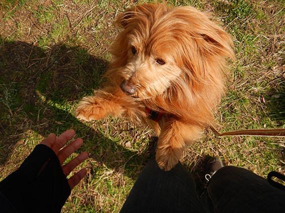 抱っこしてもらいたがっている犬
