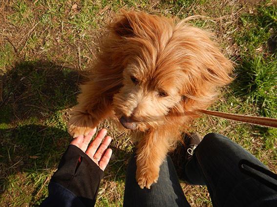 抱っこして欲しい犬