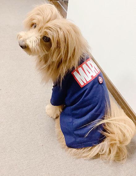 子供服を着た犬