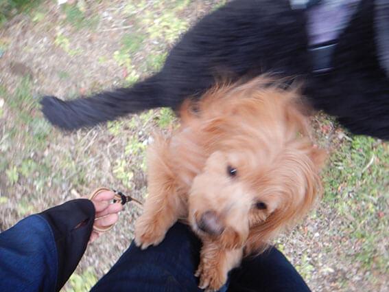 抱っこをせがむ犬