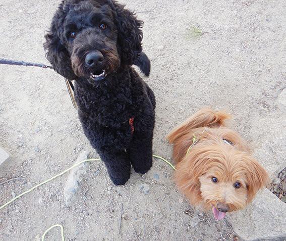 大型犬と小型犬となかよし