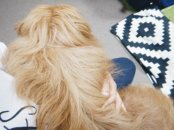 抱っこされる犬