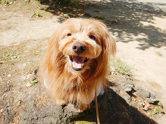 大笑いする犬