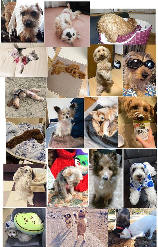 いろんな犬の写真