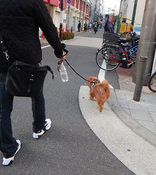 街中を歩く犬